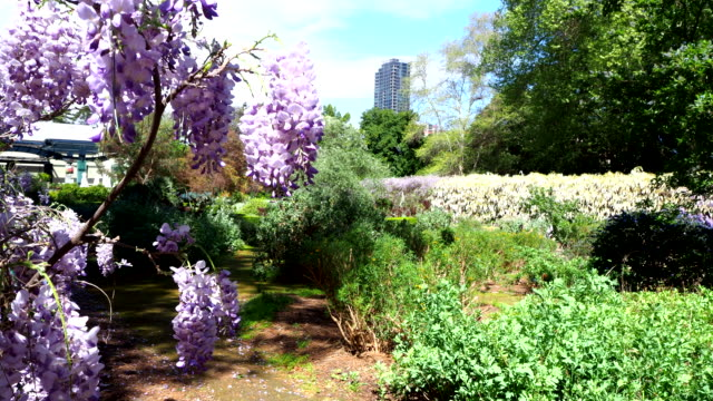 植物園 - アデレード、オーストラリア - アデレード点の映像素材/bロール