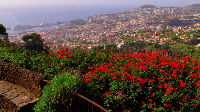 botanical gardens - madeira stock videos and b-roll footage