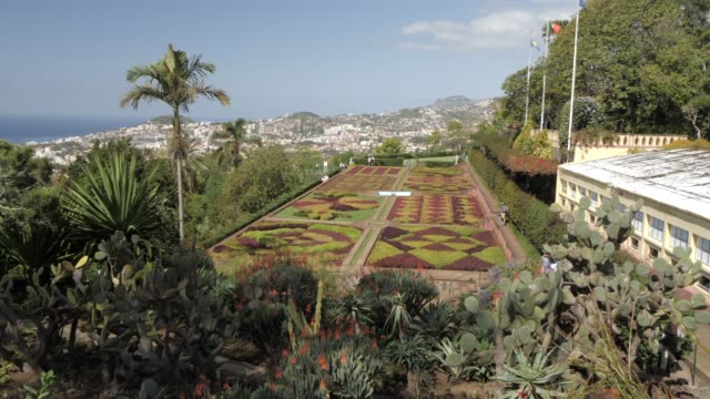 botanical gardens with old town visible in background, funchal, madeira, portugal, atlantic, europe - botanical garden stock videos & royalty-free footage