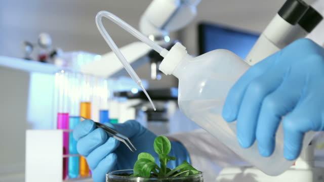 vídeos de stock e filmes b-roll de botânico experiência de laboratório - modificação genética
