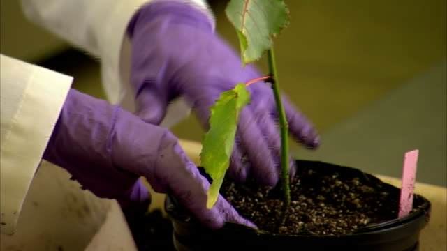 a botanist places an identifying marker in a pot with a sapling. - botanica video stock e b–roll