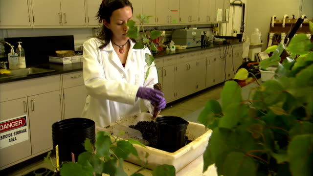 a botanist plants a sapling in a laboratory. - botanist stock videos & royalty-free footage