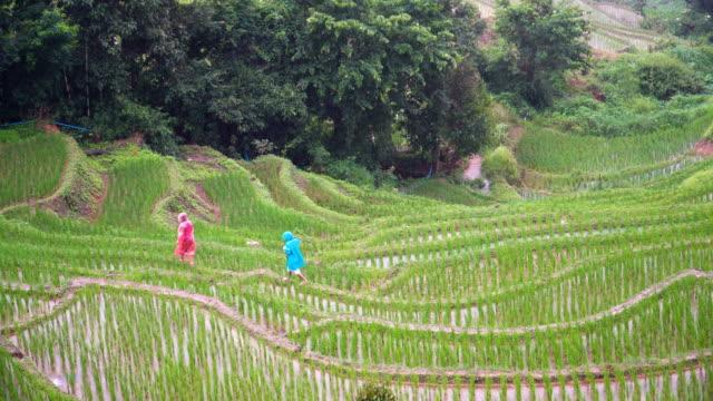 vídeos de stock, filmes e b-roll de ambos os viajantes tente caminhar ao longo do terraço de arroz - capa de chuva