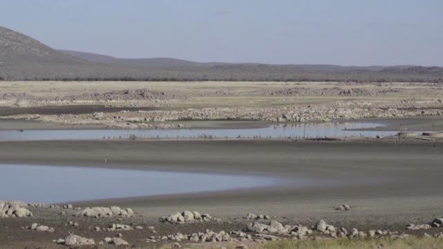 stockvideo's en b-roll-footage met botsuana ha desbloqueado fondos de urgencia para responder a la sequia mas grave de los ultimos treinta anos - agricultura