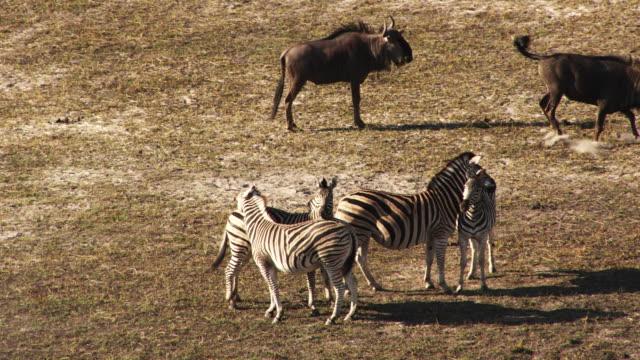 Botswana, Africa : Elephant