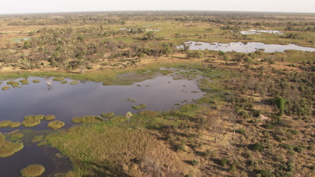 botswana, africa: landscape - オカバンゴデルタ点の映像素材/bロール