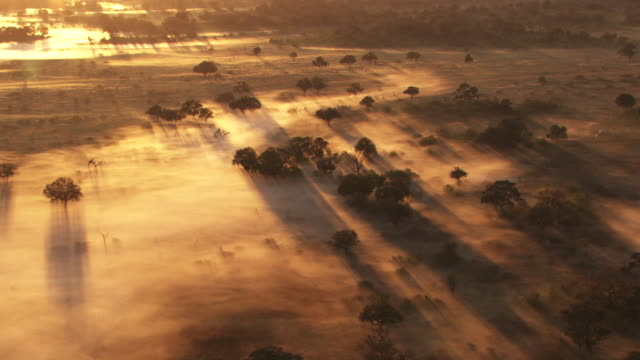 vídeos de stock, filmes e b-roll de botswana, africa : savannah in the mist at sunrise - savana