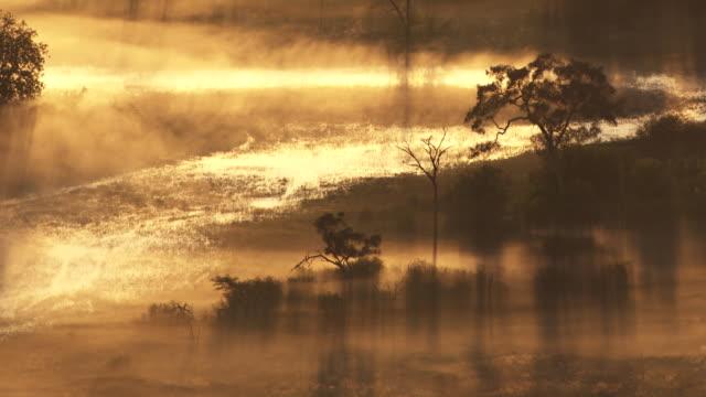 vídeos y material grabado en eventos de stock de botswana, africa : savannah in the mist at sunrise - delta de okavango