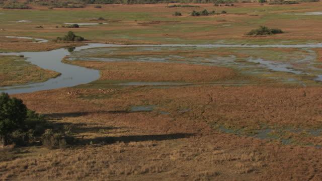 vidéos et rushes de botswana : antelope in the okavango delta - botswana