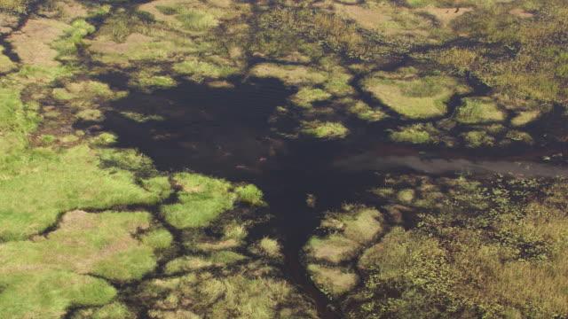 vídeos y material grabado en eventos de stock de botswana : hippopotamus in water - delta de okavango