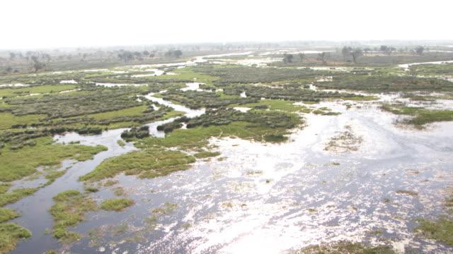 botswana : water in the forest - オカバンゴデルタ点の映像素材/bロール