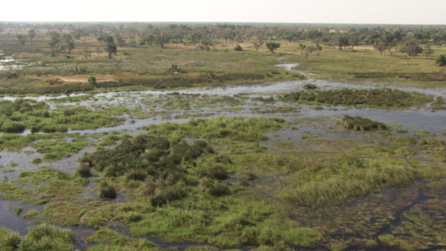 botswana : water in the forest - ボツワナ点の映像素材/bロール