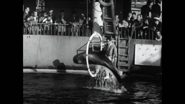 bottlenose whales jump through hoops in marine park - tier in gefangenschaft stock-videos und b-roll-filmmaterial
