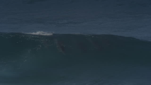 ms 2 bottlenosed dolphin groups surfing and visible underwater - bottle nosed dolphin stock videos & royalty-free footage