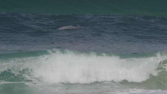 SLOMO Bottlenosed dolphin lying on its back in surf