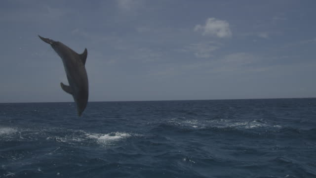 2 bottlenosed dolphins leap from water in open sea - dolphin stock videos & royalty-free footage