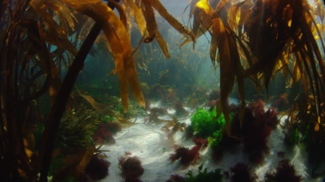 bottom of sea. - seaweed stock videos & royalty-free footage