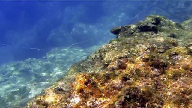 bottom of the adriatic sea - 地衣類点の映像素材/bロール