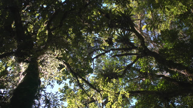 Bottom view of Rain Forest with Bromelias and wind