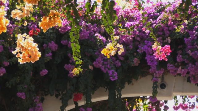 cu pan bougainvillea on archway/ puerto de mogan, grand canary, canary islands - grand canary stock videos and b-roll footage