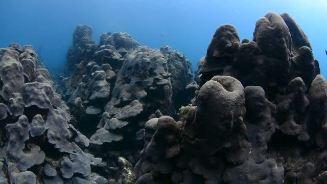 boulder star coral. - 水中カメラ点の映像素材/bロール