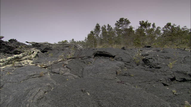 boulders, burned trees, and volcanic soil lie in a lava path. - burnt stock videos & royalty-free footage