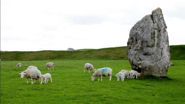 bouncing lambs at avebury stone circle - mpeg video format stock videos & royalty-free footage