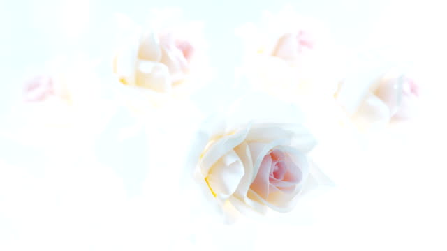 stockvideo's en b-roll-footage met bouquet of artificial roses - overexposed