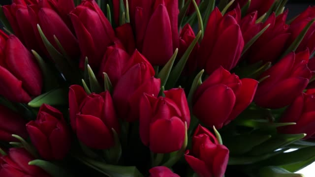 bouquet of beautiful red rose buds - bunch stock videos and b-roll footage