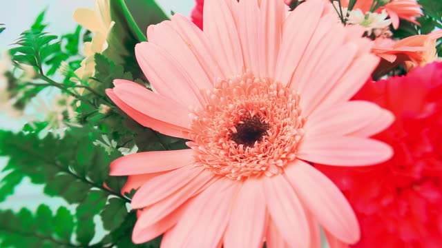 vídeos de stock, filmes e b-roll de ramalhete das flores - bouquet
