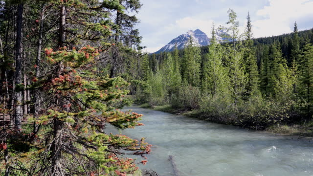 bow river at lake louise campground in summer, alberta, canada - turquoise coloured stock videos & royalty-free footage