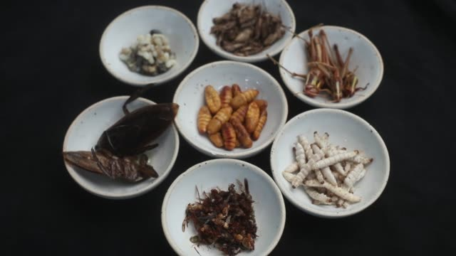bowls of ants clockwise from bottom center giant water beetle ant eggs white cricket grasshoppers bamboo caterpillar and silkworm center sit on... - cricket insect stock videos and b-roll footage