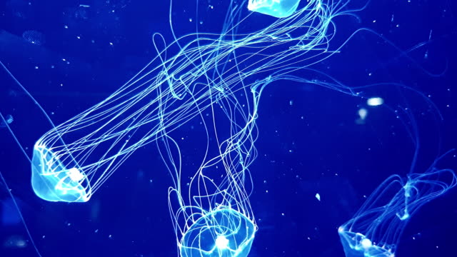 box jellyfish in the dark of underwater world of deep sea animal - sea anemone stock videos & royalty-free footage