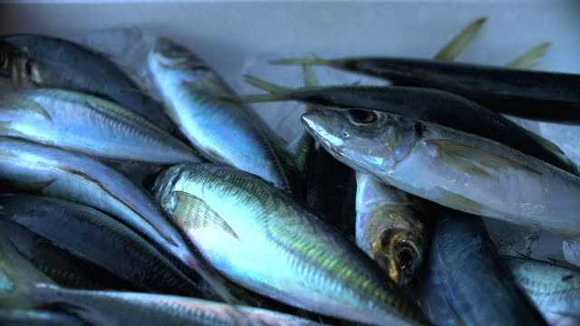a box of fish, japanese horse mackerel, japan - crushed ice stock videos & royalty-free footage