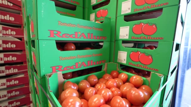 box of fresh tomatoes at the smith & brock warehouse on april 07, 2020 in london, united kingdom. smith & brock, who are best known for supplying... - tomato stock videos & royalty-free footage