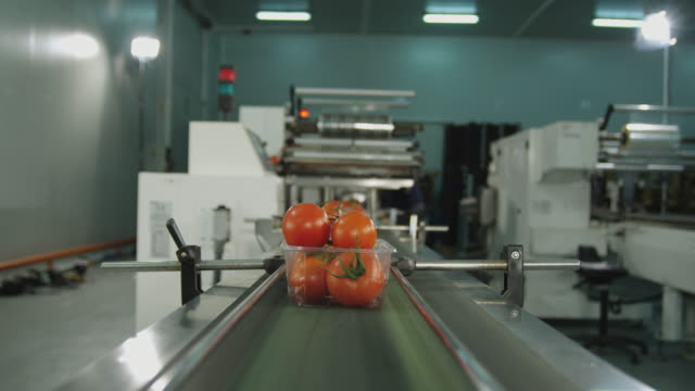 ws pov box of tomatoes travelling on conveyor belt / algarrobo, malaga, spain - tomato stock videos and b-roll footage