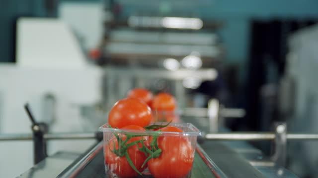 cu pov box of tomatoes travelling on conveyor belt / algarrobo, malaga, spain - tomato stock videos and b-roll footage