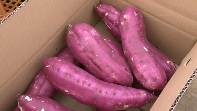 boxed sweet potato, ibaraki, japan - sweet potato stock videos & royalty-free footage