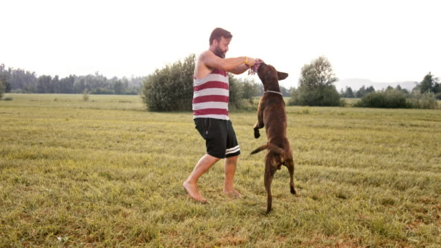 slo mo boxer dog pulling rope with his male owner - boxer dog stock videos and b-roll footage