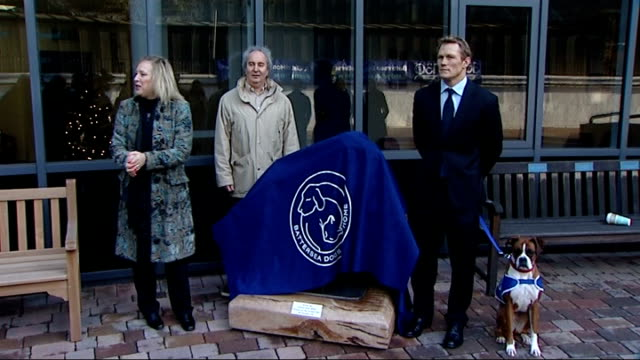 Boxer dog sculpture unveiled at Battersea Dogs and Cats Home by Josh Lewsey interviews and unveiling Close shots of boxer dog / Lewsey petting dog /...