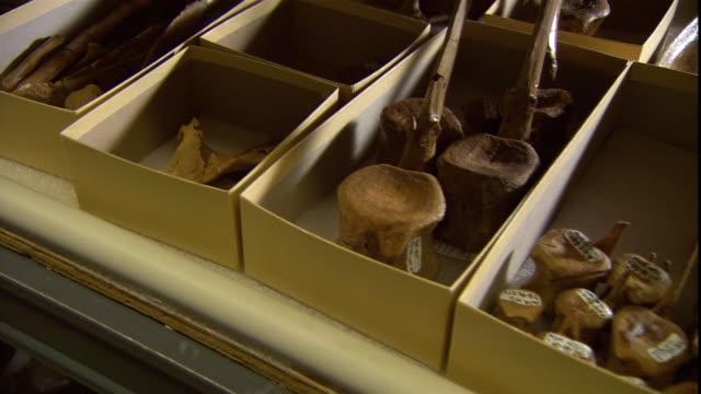 boxes contain dinosaur fossils. - 化石点の映像素材/bロール