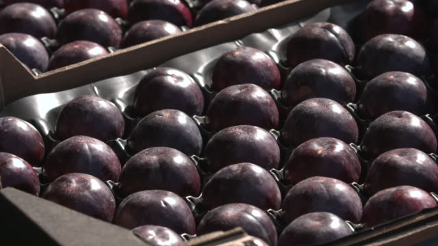 boxes of plums in vegetable market, uk - plum stock videos & royalty-free footage