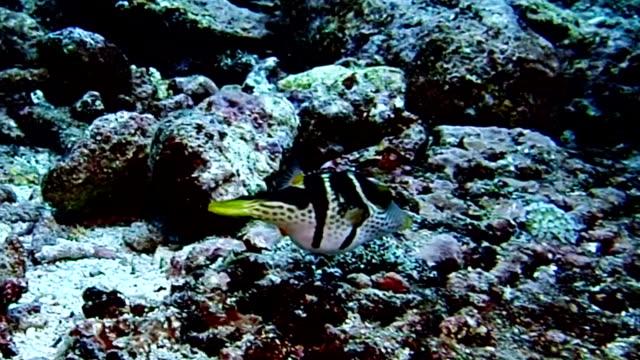 boxfish - balloonfish stock videos and b-roll footage