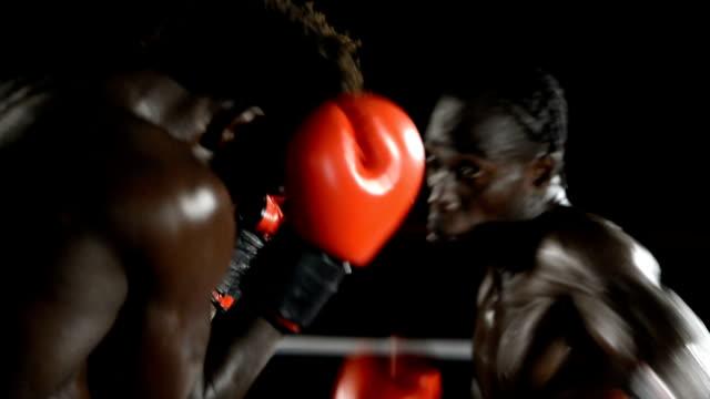 vídeos de stock e filmes b-roll de boxe - boxe desporto
