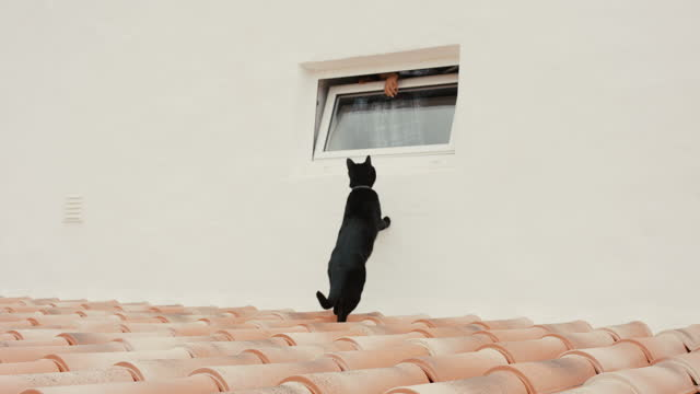 boy and black cat playing through window - one animal stock videos & royalty-free footage