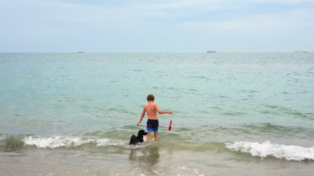 boy and dog in sea - walking in water stock videos & royalty-free footage