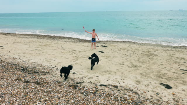 boy and dog in sea - swimming shorts stock videos & royalty-free footage