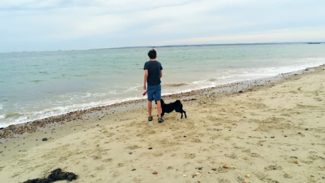 boy and dog in sea - children only video stock e b–roll