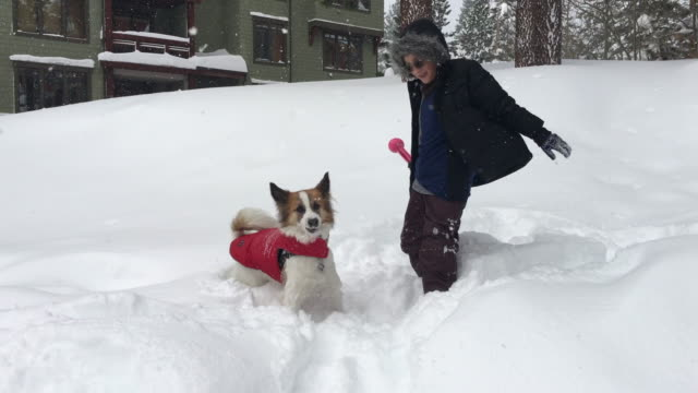 stockvideo's en b-roll-footage met a boy and dog play in the snow at a ski resort. - ski jack