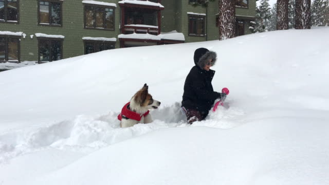a boy and dog play in the snow at a ski resort. - abiti pesanti video stock e b–roll